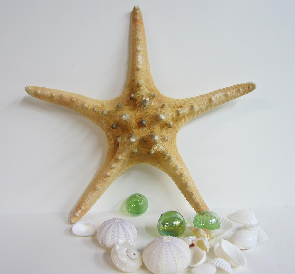 Beach decor starfish nautical decor brown knobby xxl for Decoration xxl