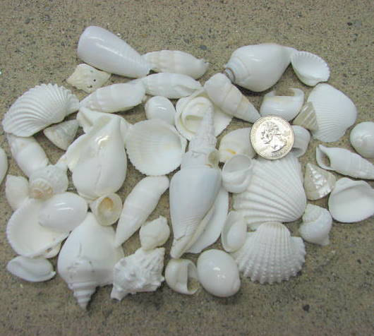 beach decor white shell mix nautical decor beach wedding